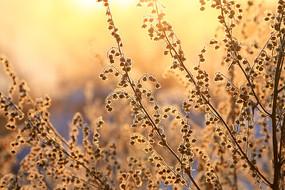 野草冰霜阳光