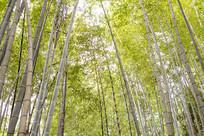茂盛的竹林