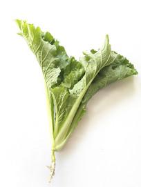 白底绿叶菜