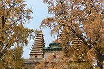 北京秋天的五塔寺