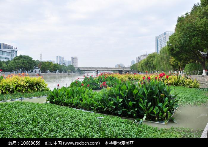 河道里的花卉绿植图片