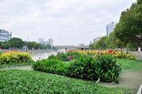 河道里的花卉绿植
