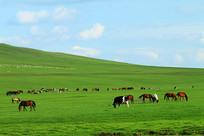 绿色牧场马群