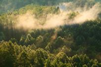 大兴安岭密林晨雾缥缈