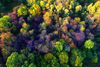 航拍茂密五彩林
