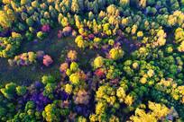 航拍五彩密林