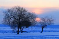 冬季雪原树林朝阳风景