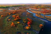 金色茂密树林河流秋色