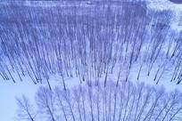 雪野密林风景(航拍)