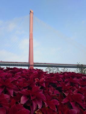 桥梁下鲜花