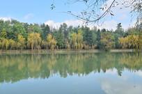 初秋湖泊绿树风景