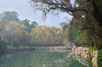 公园湖泊树木风景图片