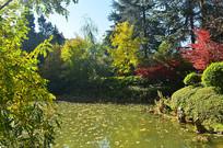 湖泊绿色风景