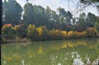 湖泊树木风光