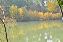 湖泊树木金秋风景