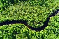 漠河林区绿色林海河流