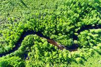 漠河林区绿色树林河湾
