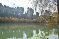 秋天垂柳湖上风光
