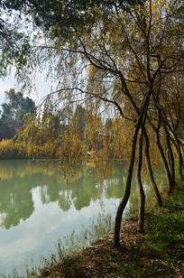 秋天湖边风景