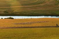 草原黄昏时的河岸羊群