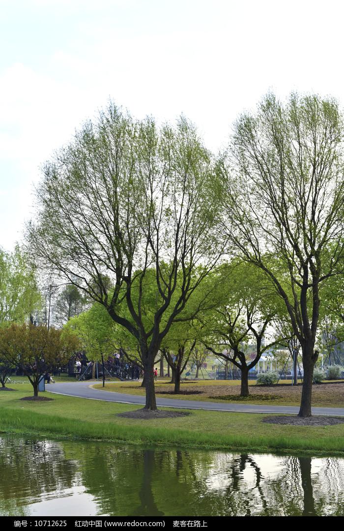 春天的树木图片