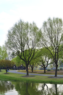 春天的树木