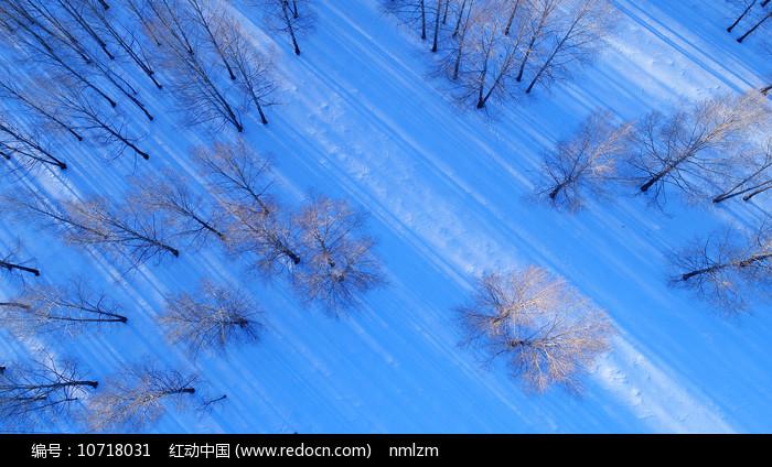 航拍林海雪原树林 图片