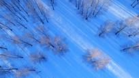航拍林海雪原树林