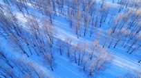 航拍雪色树林