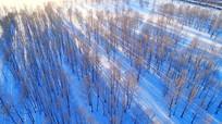 航拍雪原密林风光
