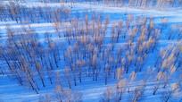 航拍雪原树林风光