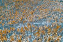 金秋林海彩林秋雪