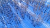 雪野密林风景