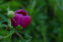 沾满露珠的粉色花