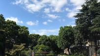蓝天下的绿色园林