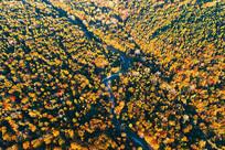 长白山彩林河流秋景