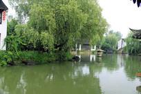 池塘上的树木