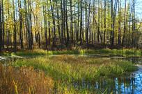 大兴安岭森林湖密林