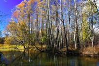 大兴安岭小河彩林秋景