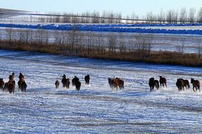 呼伦贝尔草原冬季马群