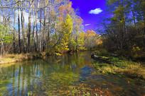 金秋彩林河流风景