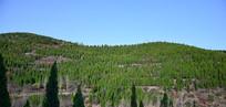 青山绿植风景