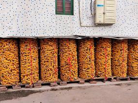 秋收之玉米