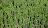 山坡绿化景观