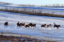 雪原牧场马群
