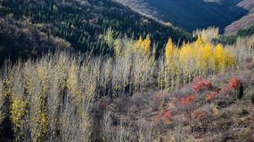 彩色的山谷植被
