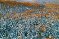 大兴安岭彩林秋雪
