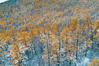 大兴安岭森林秋季彩林雪景