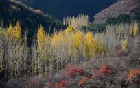 秋色的山林植被