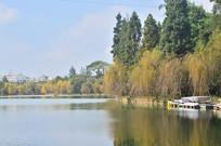 秋天湖上垂柳风景